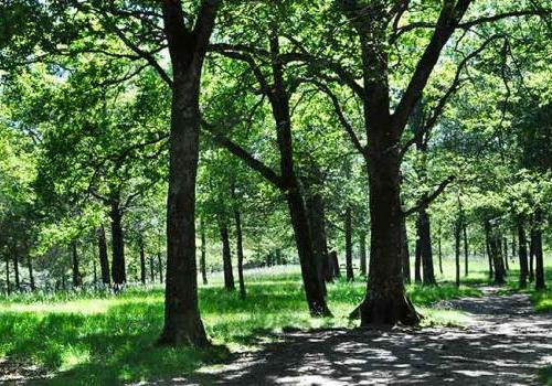Forêt Ustaritz