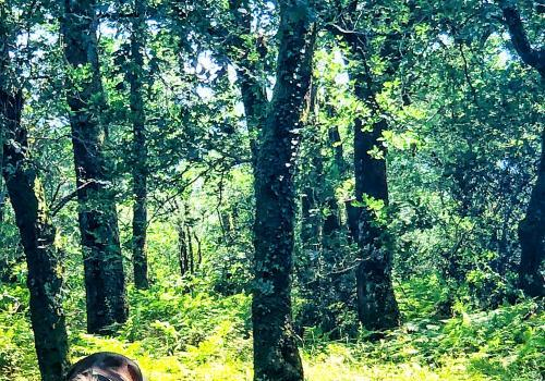 Forêt d'Ustaritz